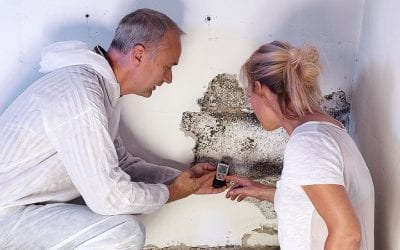 Reasons Why Mold Testing Is Essential in Spring