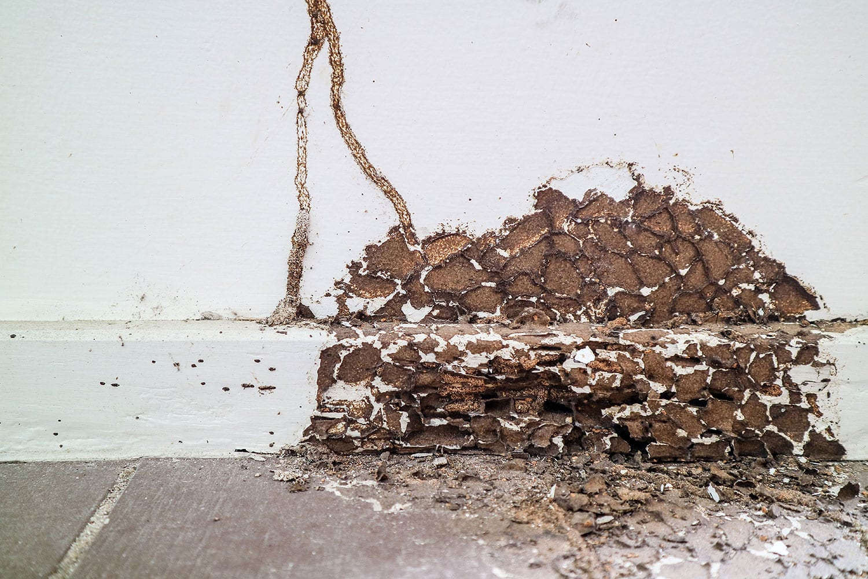 Termite6